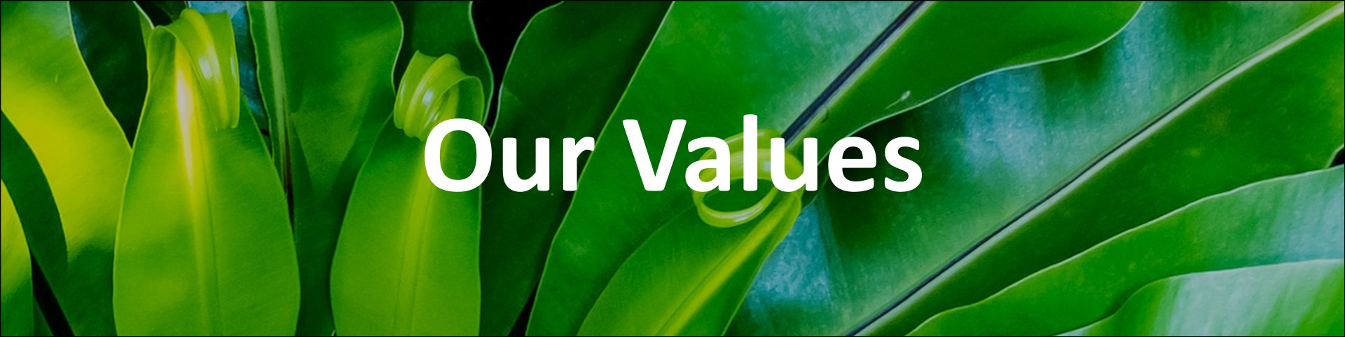 Our Values Longshaw Consulting Group